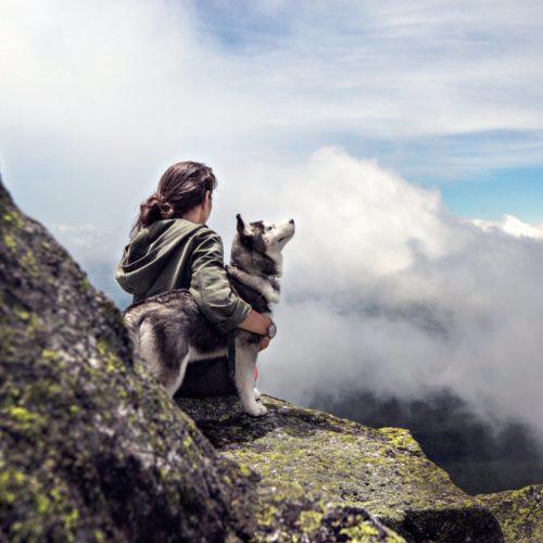 Randonnées et bivouac avec un chien