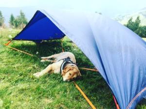 randonnée et bivouac avec un chien